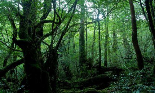 大いなる森の声