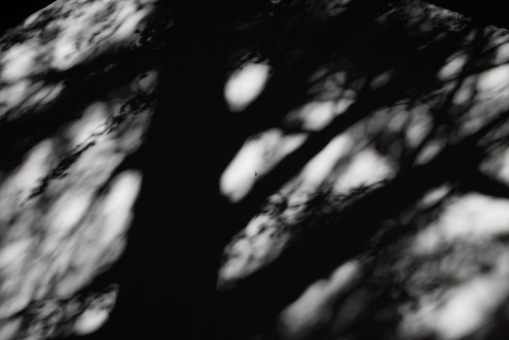 忍び寄る影