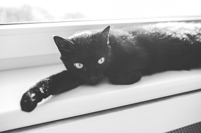 cat-791180_640